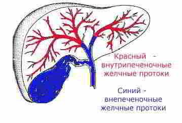 внутрипеченочные и внепеченочные желчные протоки